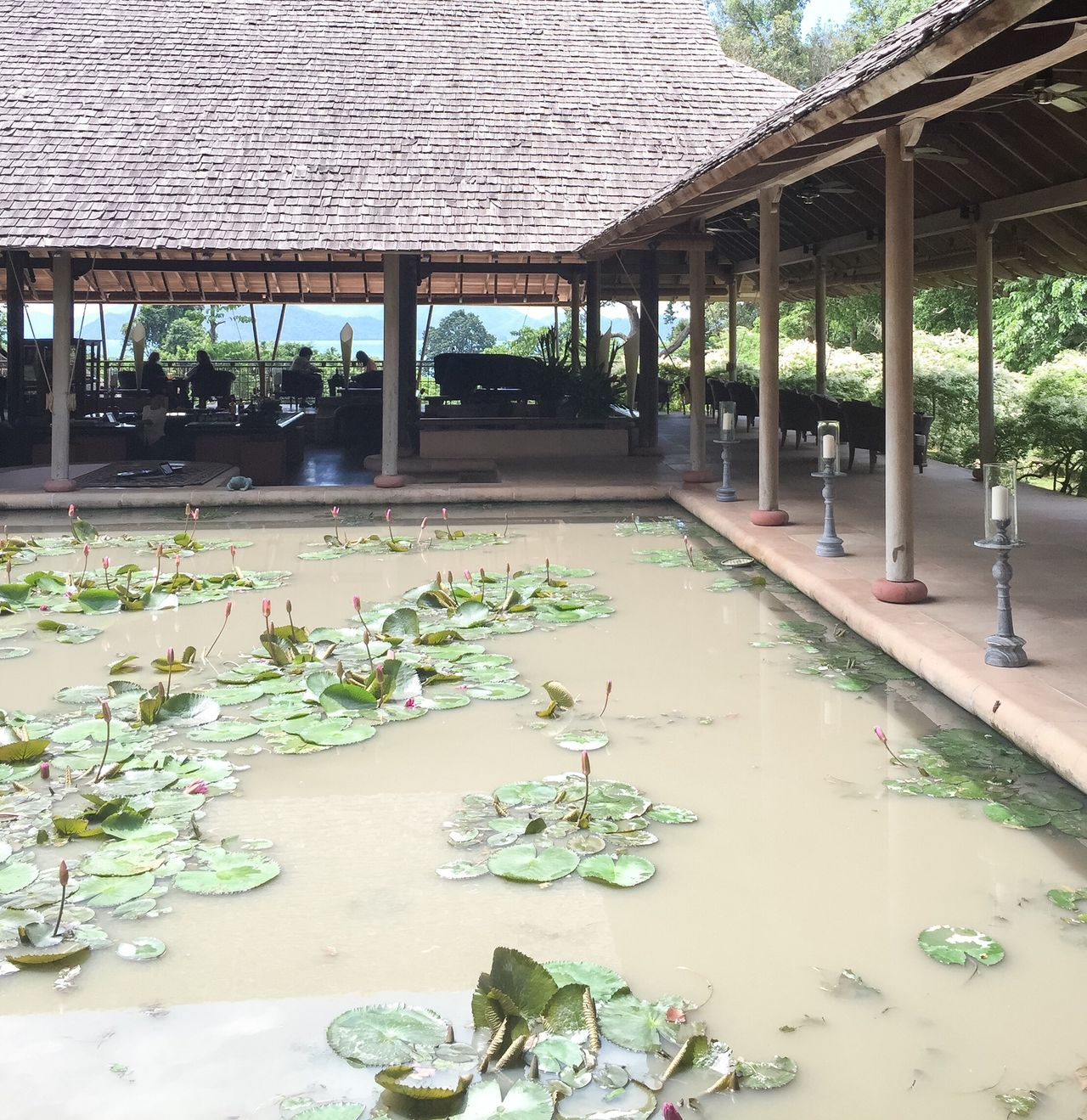 Datai Resort Langkawi Island Malaysia Architecture Nature Water Lily Pond Luxury Travel Vacations EyeEmNewHere EyeEmNewHere