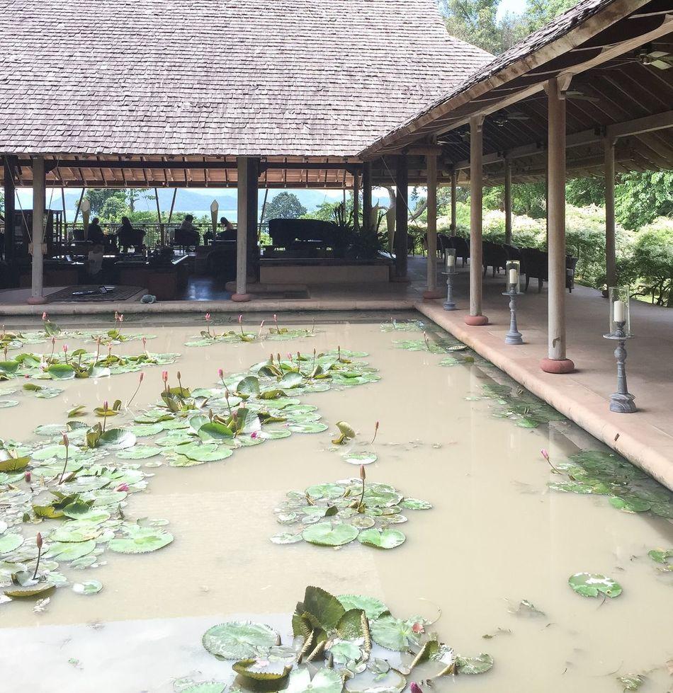 Datai Resort Langkawi Island Malaysia Architecture Nature Water Lily Pond Luxury Travel Vacations EyeEmNewHere EyeEmNewHere