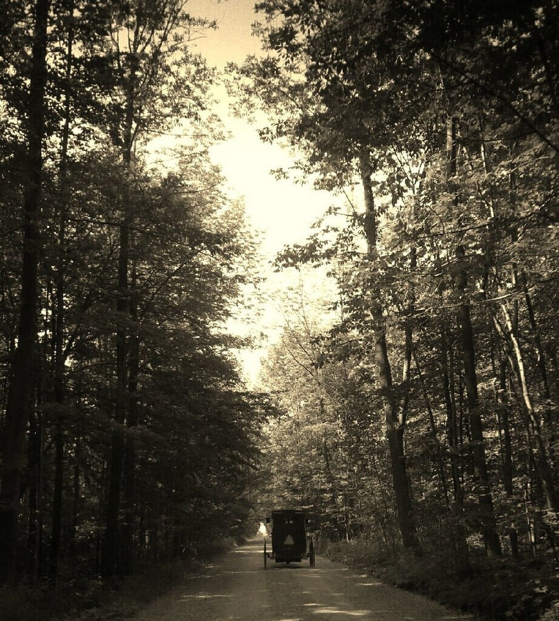 tree, transportation, forest, nature, road, the way forward, no people, day, outdoors, branch, beauty in nature