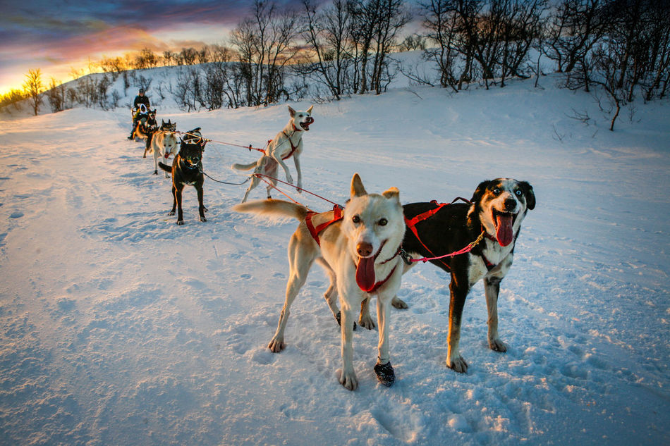 Beautiful stock photos of sweden, Animal Themes, Cold Temperature, Covered, Covering
