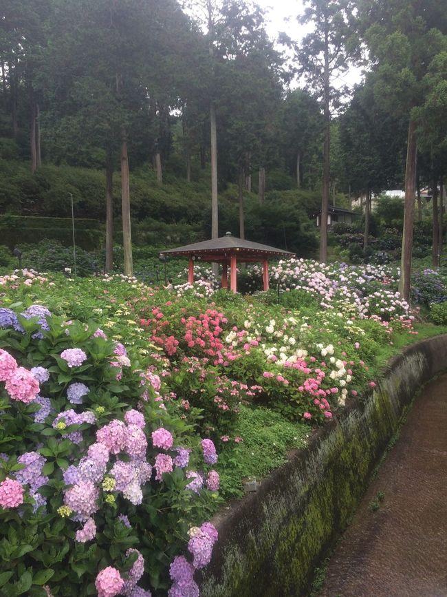 Hydrangea Hydrangea Flower Mimurotoji Kyoto