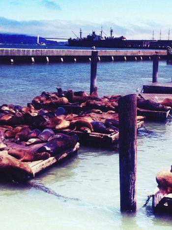 Pier 39-sanfrancisco