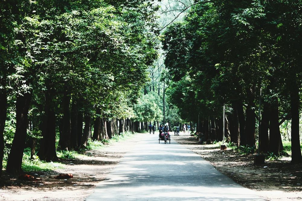 The Street Photographer - 2017 EyeEm Awards Tree Transportation The Way Forward Road People Outdoors Bicycle One Person Beauty In Nature Nature Adults Only Only Men City Day Tree Trunk Real People Adult Live For The Story