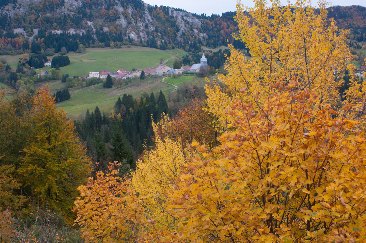 autumn, tree, change, leaf, nature, scenics, forest, outdoors, beauty in nature, maple tree, tranquil scene, landscape, day, no people, mountain, sky