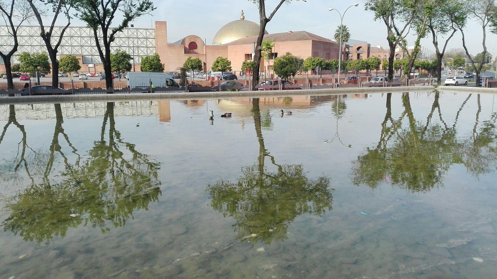 Hello World Patos A La Vista Taking Photos Enjoying Life Streetphotography Mi Ciudad My Town Hello World España🇪🇸 Si Es Sevilla