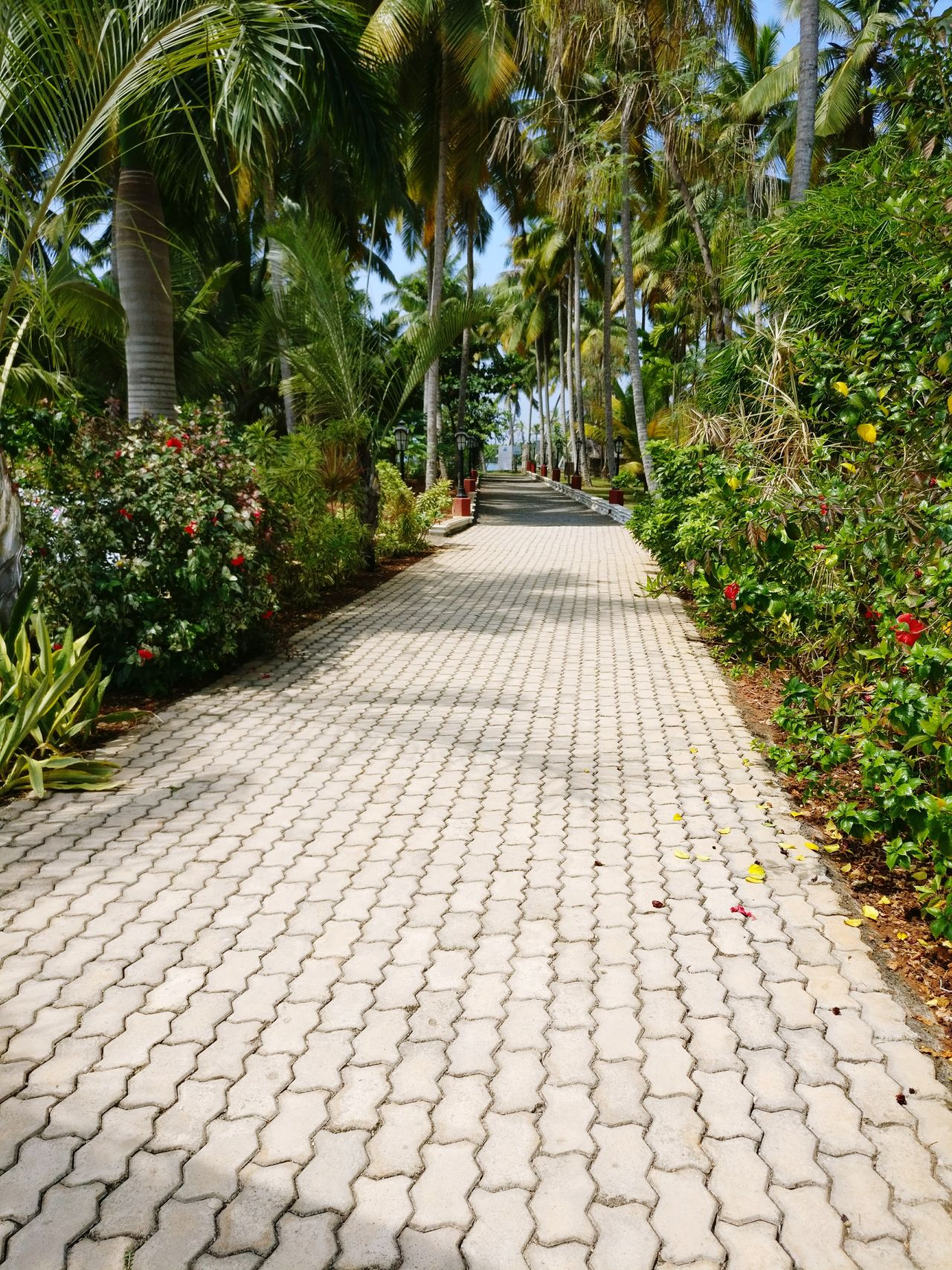 Pathway leading to the famous Kerala backwaters! Godsowncountrykerala Poovar Palm Trees Nature Incredibleindia