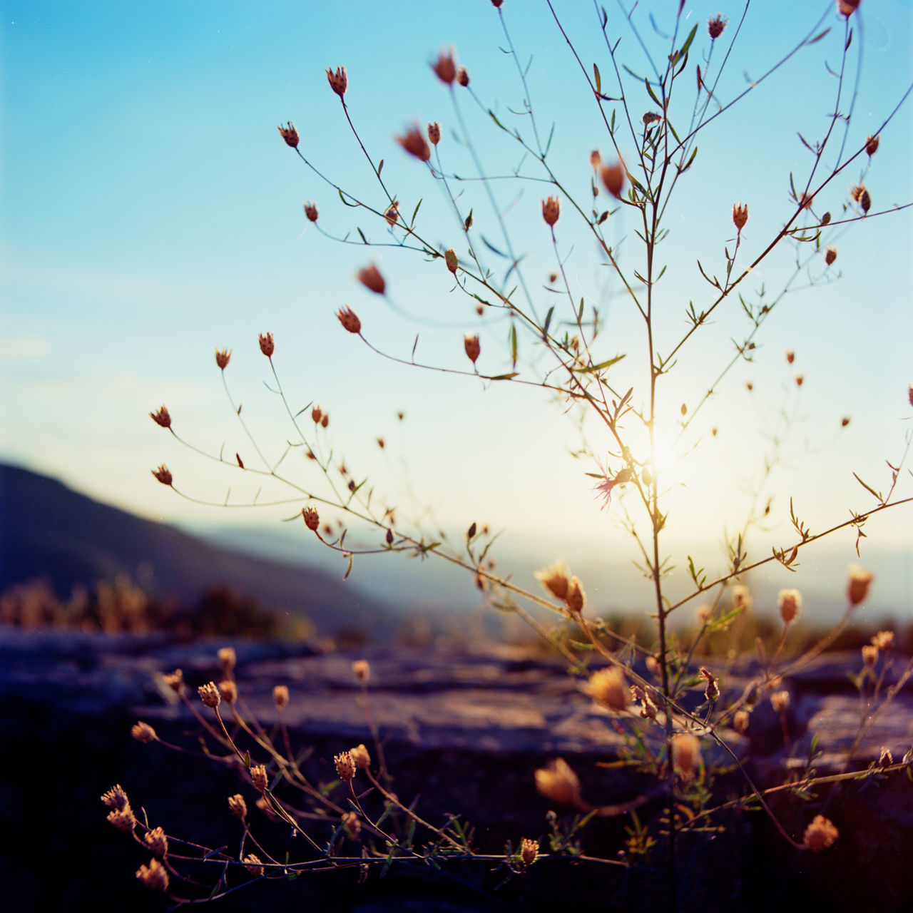 Beauty In Nature Clear Sky Close-up Colorful Day Flowers Freshness Growth Hasselblad Inspiration Mountains Mountains And Sky Nature No People Outdoors Pastel Plant Sky Sunrise Sunset Tranquility