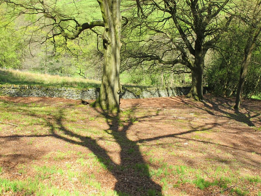 Tree Nature Shadow Day Tree Trunk Growth Sunlight Outdoors No People Beauty In Nature Scenics Branch Grass EyeEm Nature Lover WoodLand Sunlight Beauty In Nature Tree Trunk Springtime Green Color Lush Foliage