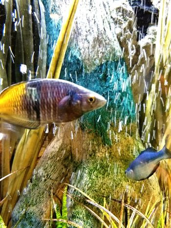 Colorful Fish Aquarium Beauty In Nature Beautiful Hospital Life Delicate Beauty