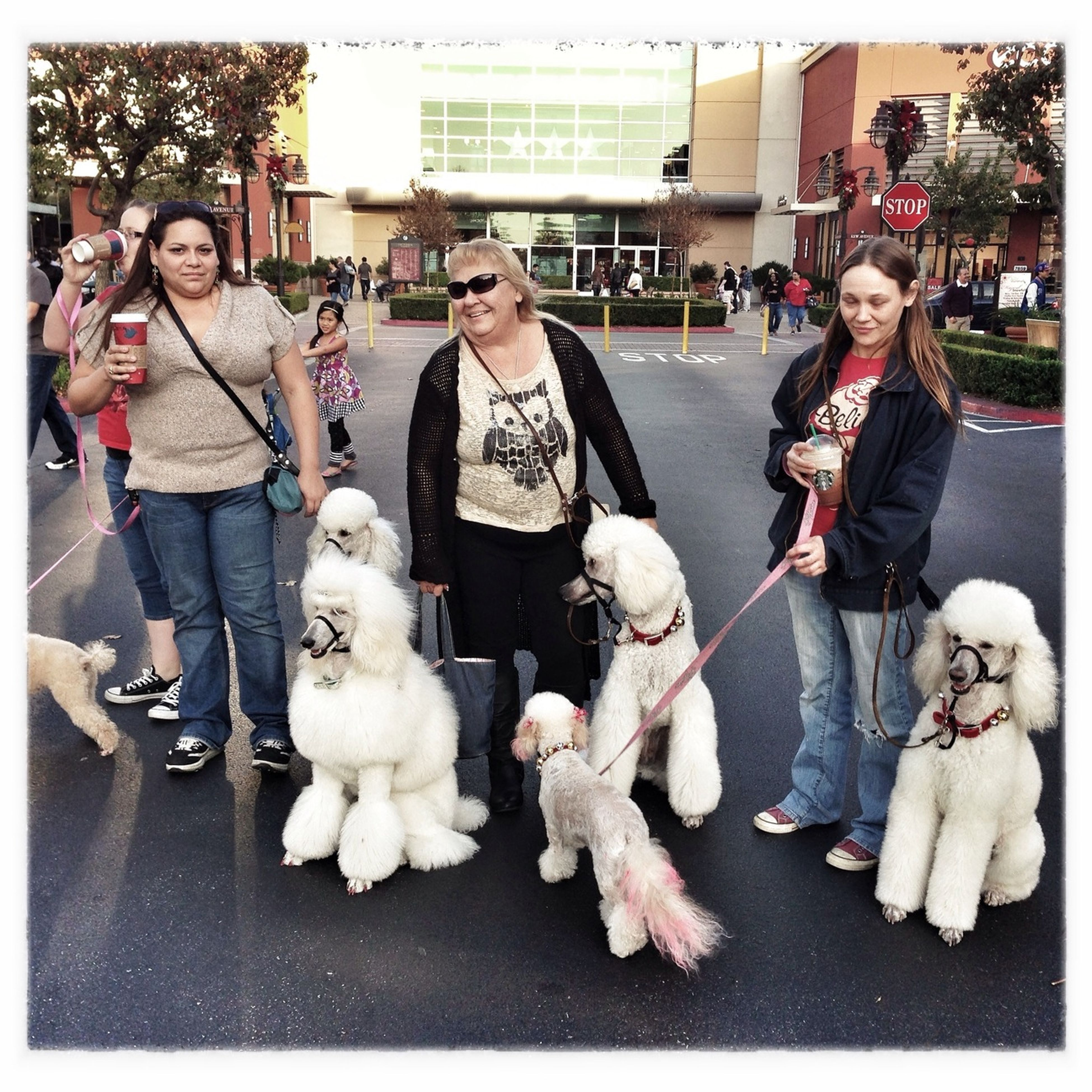 Giant Poodles