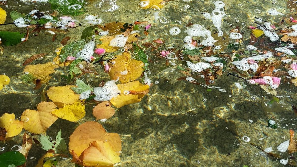Autumn in water Autumn Atumn Is Here ... Fall Mood! Autumnbeauty Leafs Colors Leafs In The Water Beauty In Nature Nature Special Moment Water_collection Art Is Everywhere Something Beautiful Framed Photograph