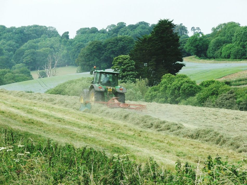 Haymaking The Modern Way Trees Feilds Linseedoil Flaxseed Flowers In Background