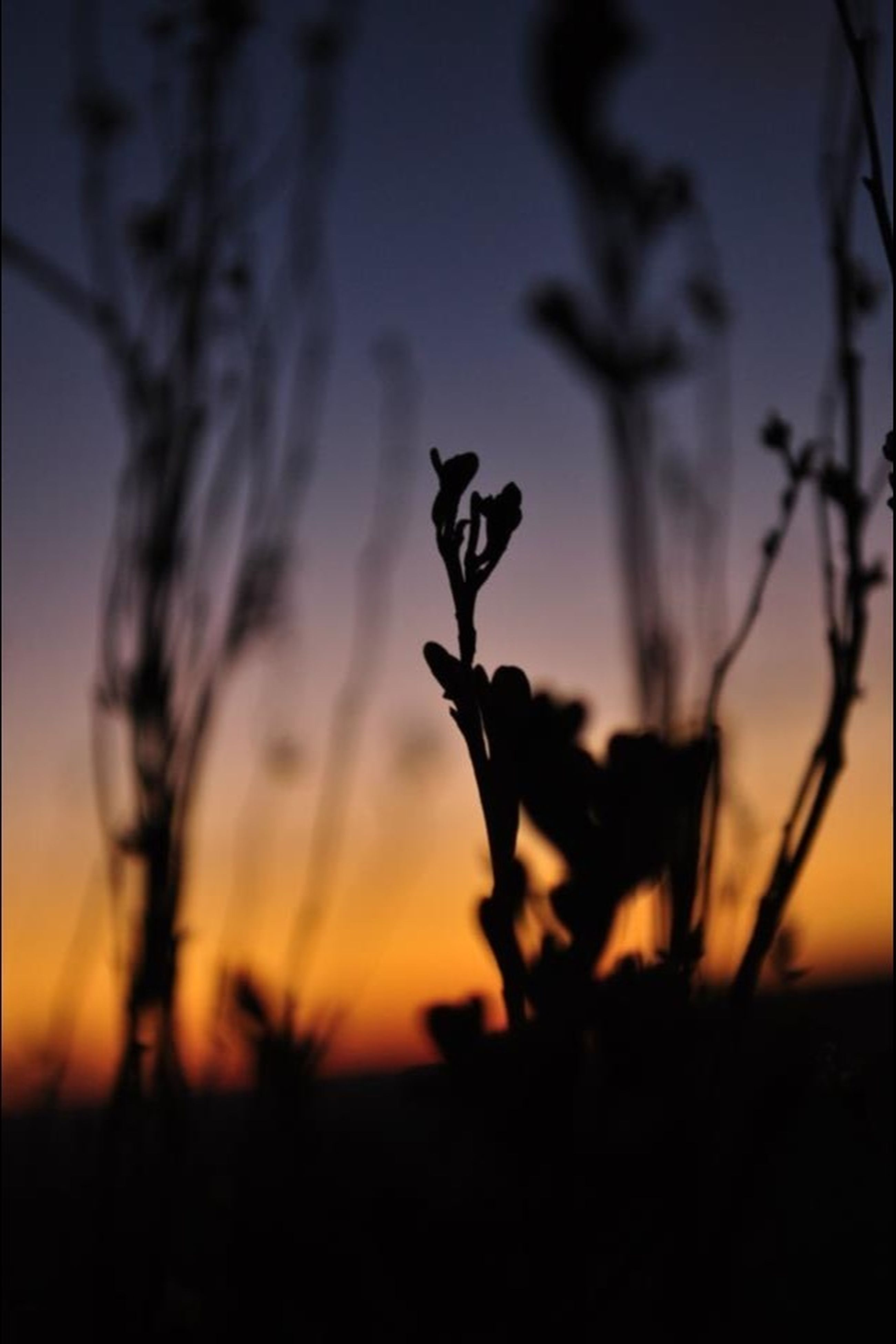 sunset, silhouette, focus on foreground, selective focus, orange color, close-up, plant, nature, stem, growth, beauty in nature, tranquility, dusk, sky, outdoors, no people, field, sunlight, branch, landscape