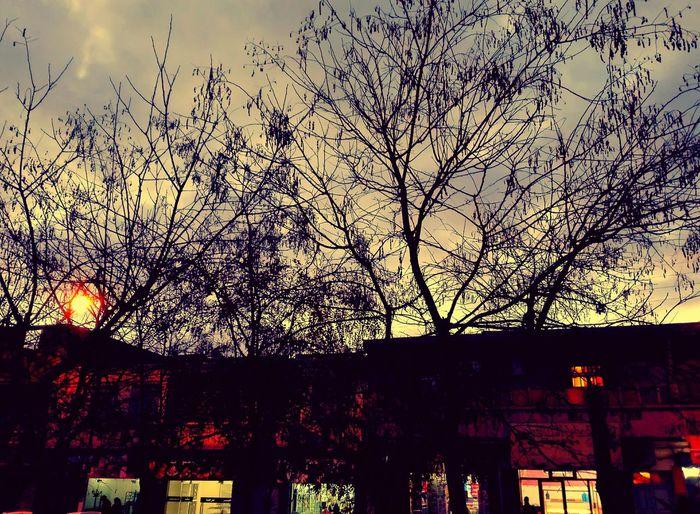 Sunset Silhouette Cloud - Sky Dramatic Sky Algeria Love First Eyeem Photo Weather Sky Backgrounds Beauty In Nature EyeEm Nature Lover House Berlin Germany🇩🇪 Streetphotography Love ♥ EyeEm Best Shots Algeria Photography Berlin Photography Bbacity Eyeemphotography Plants 🌱 Plant Photography