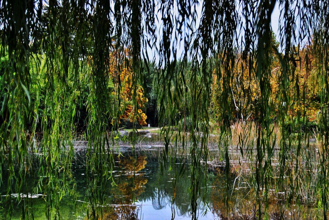 EyeEm Nature Lover TreePorn Landscape Landscape_Collection