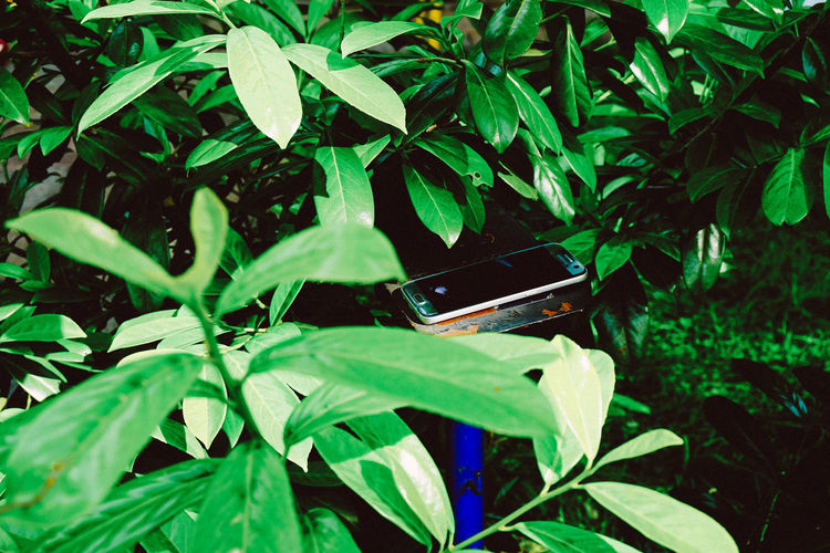 Green Color Handy In The Wild Lost In The Woods Nature VS Man Among The Trees Close-up Day Green Color Growth Hiding Leaf Leaves 🍁 Nature No People Outdoors Phone Plant Prize Technology Wireless Technology