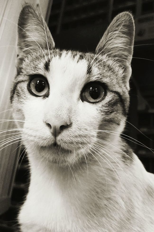 Taking Photos Hanging Out Cheese! Miauuu 😺 Feline Catlover ♡ Animals Popular Cats Blackandwhite Blackandwhite Photography