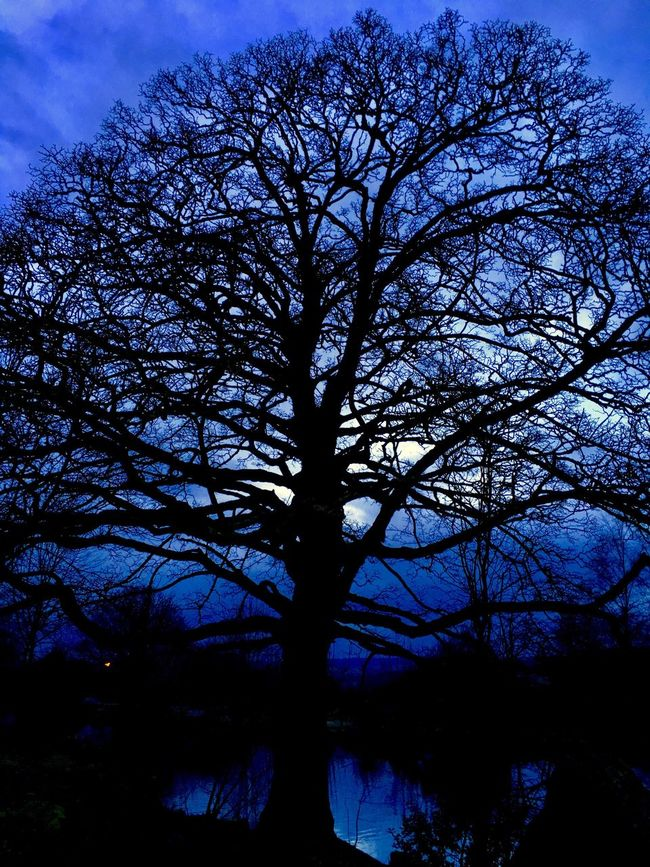 Silhouette of a tree - evening sky Tree Nature Sky Branch Silhouette Tranquility Growth Low Angle View Bare Tree Beauty In Nature Outdoors No People Scenics Day Ilkley Tarn Ilkley Moor Yorkshire