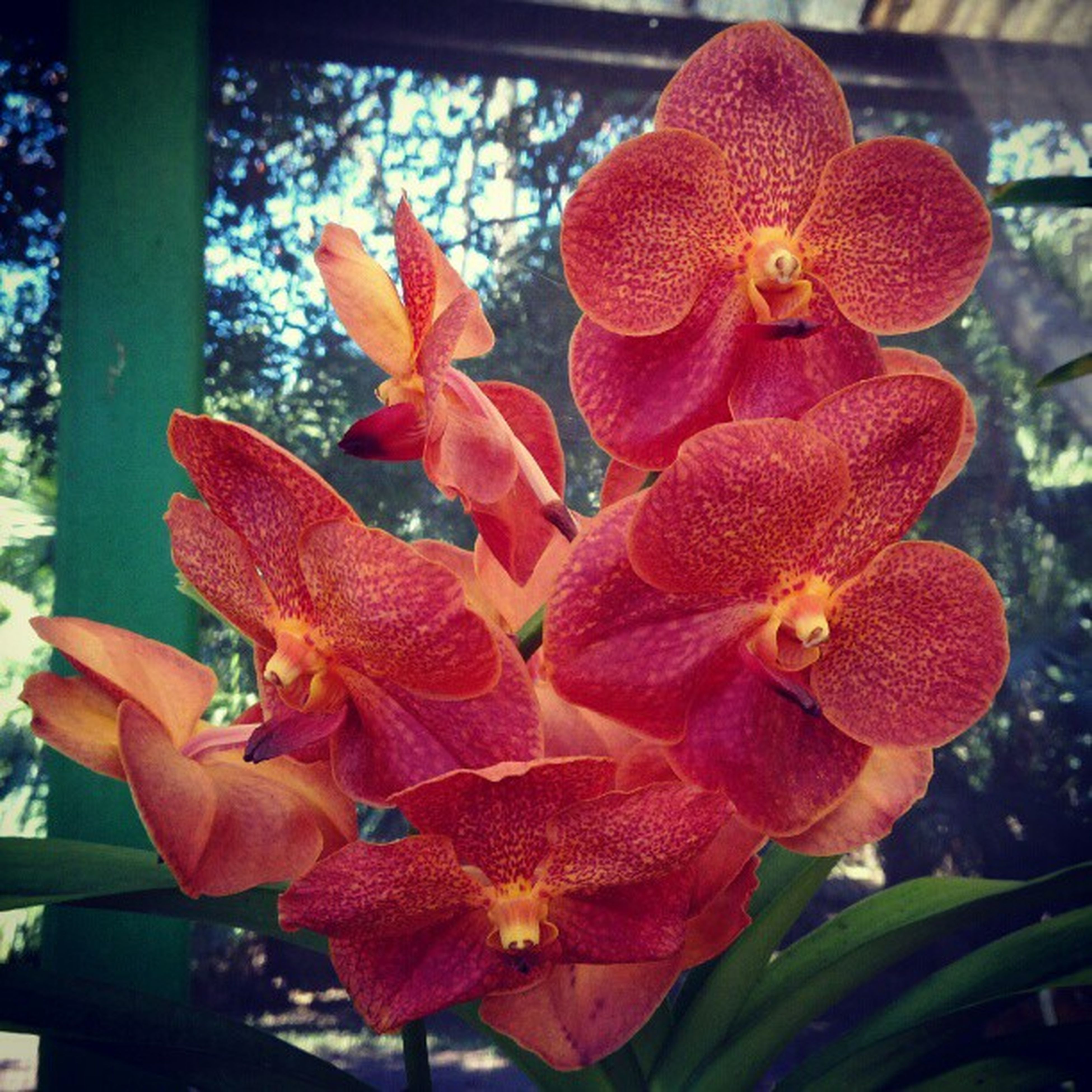 flower, petal, freshness, fragility, flower head, growth, beauty in nature, close-up, plant, nature, blooming, focus on foreground, orange color, leaf, day, no people, in bloom, indoors, stamen, orchid