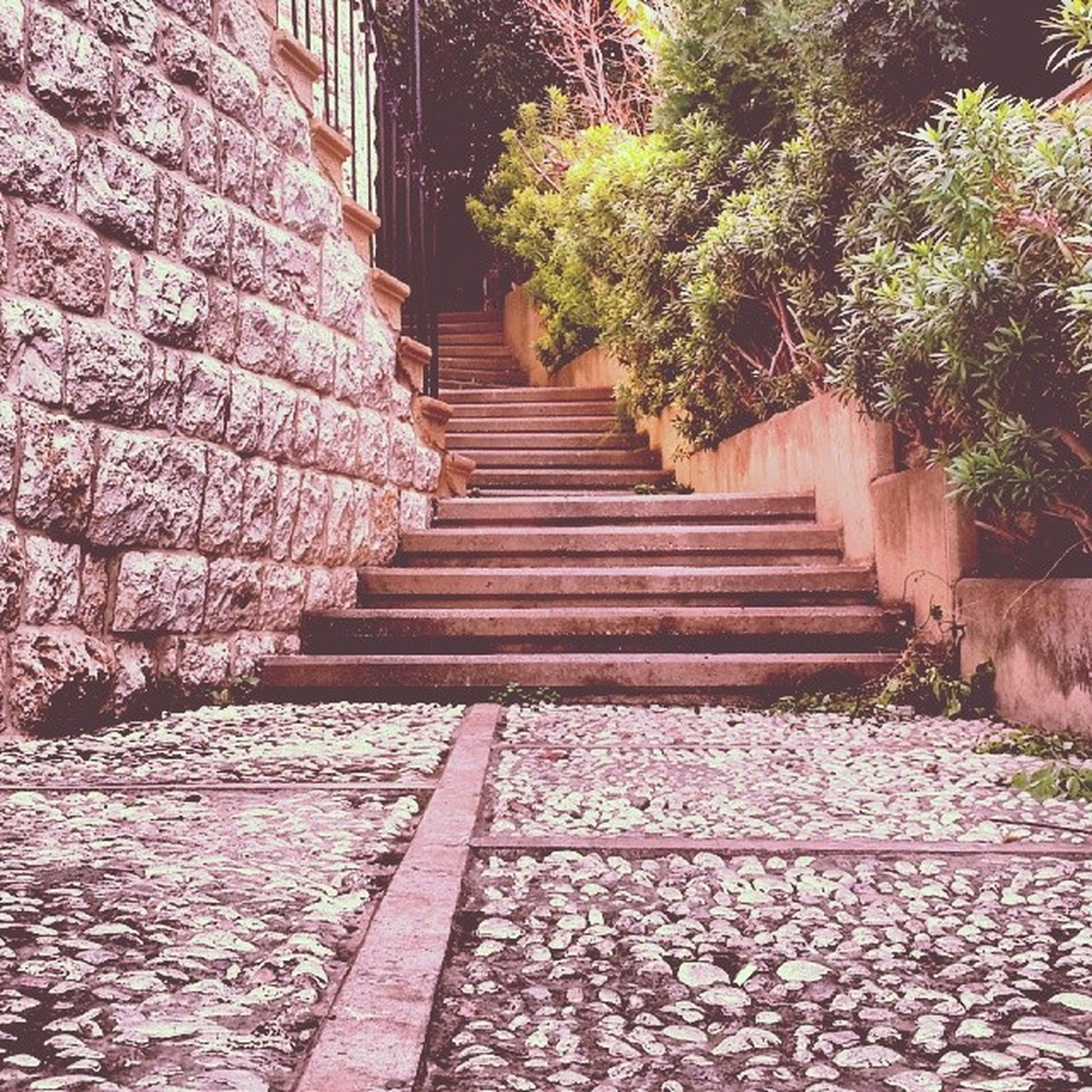 steps, steps and staircases, the way forward, staircase, built structure, architecture, plant, wall - building feature, tree, footpath, growth, walkway, stone wall, day, flower, no people, outdoors, nature, cobblestone, railing