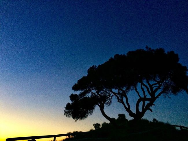 Quiet evening Silhouette Tree Nature Beauty In Nature Low Angle View Blue No People Sunset Clear Sky Sky Outdoors Tranquil Scene Dusk Tranquility