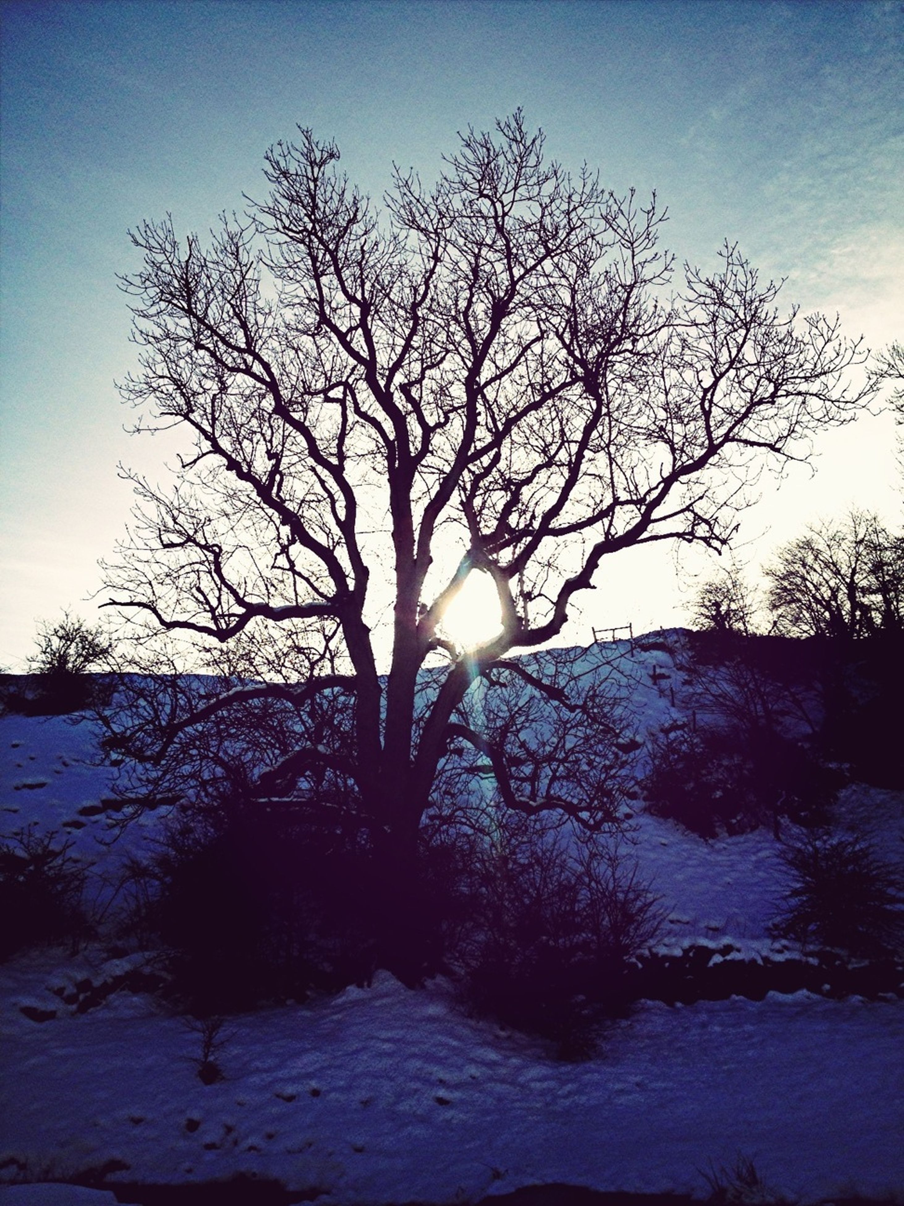 bare tree, tranquility, tranquil scene, tree, sun, branch, scenics, sky, beauty in nature, silhouette, nature, sunset, sunlight, water, lake, non-urban scene, landscape, idyllic, outdoors, no people