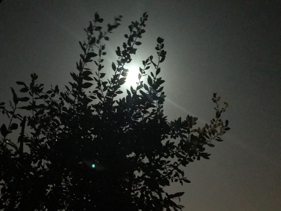 Nature Tree Silhouette Sky Low Angle View Moon Welcome To Black