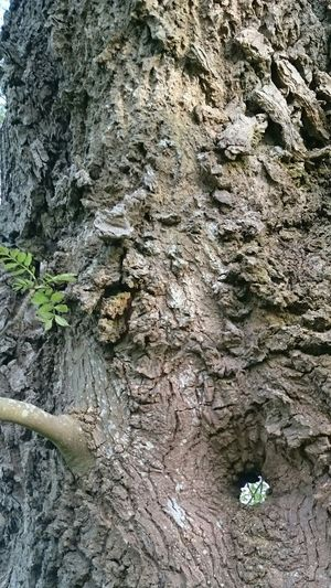 Tree Nature Bark Hole