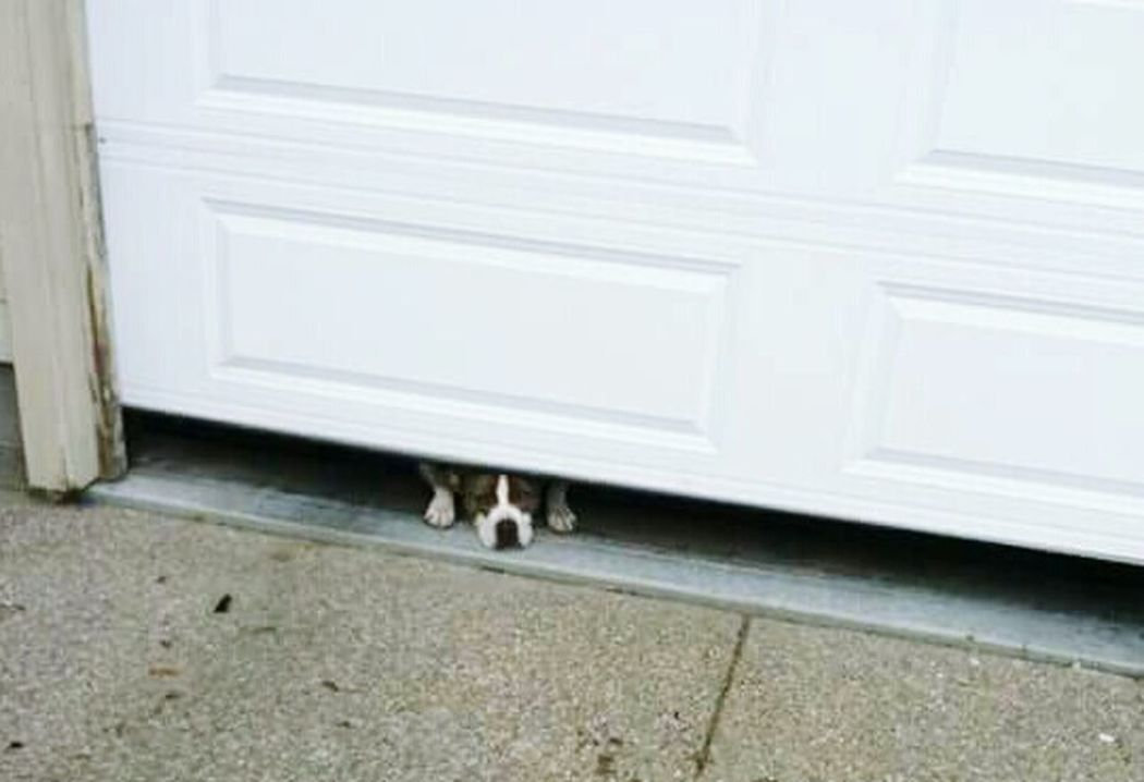 One Animal No People Day Dog Alone Sillydog Trying To Be Sneaky Caught You Puppy Love Dogslife Lilgirl Dog Pet Portraits