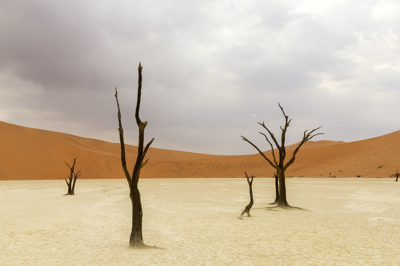 Beautiful stock photos of baum, Arid Climate, Bare Tree, Branch, Cloud - Sky