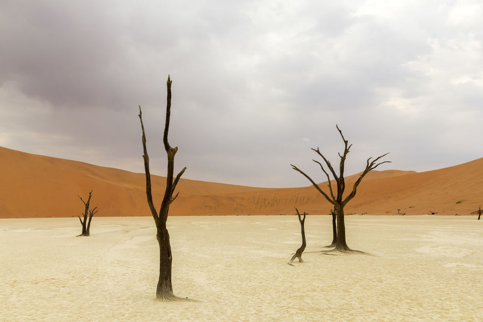 Beautiful stock photos of wüste, Arid Climate, Bare Tree, Branch, Cloud - Sky