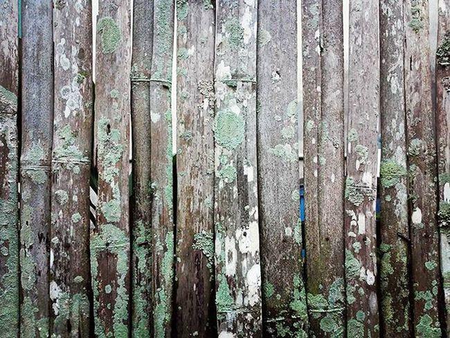 Patern Pagar Bambu dan Jamur