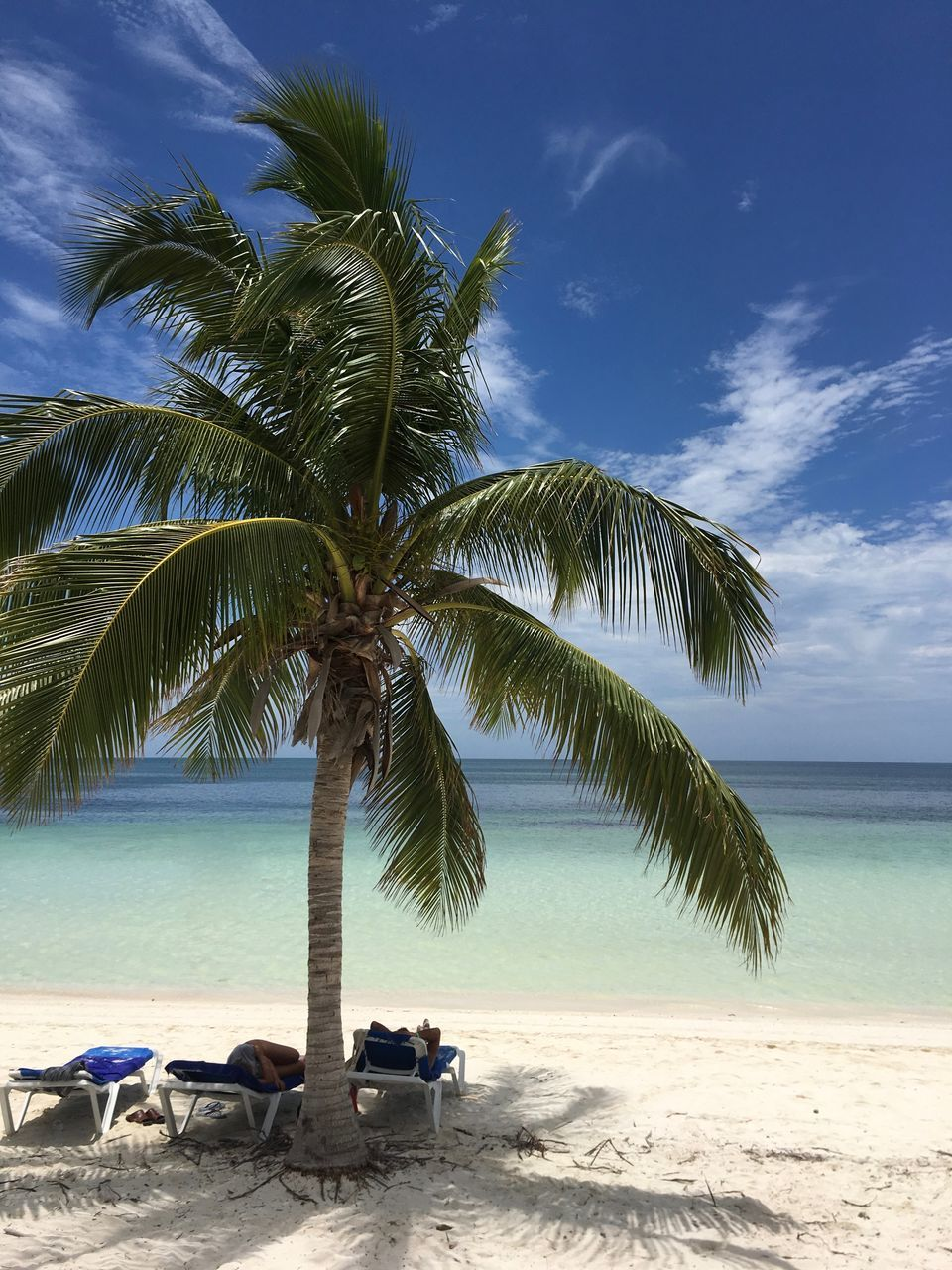 beach, sea, palm tree, sand, sky, tree, cloud - sky, nature, scenics, horizon over water, tranquility, beauty in nature, tranquil scene, water, relaxation, outdoors, day, blue, no people