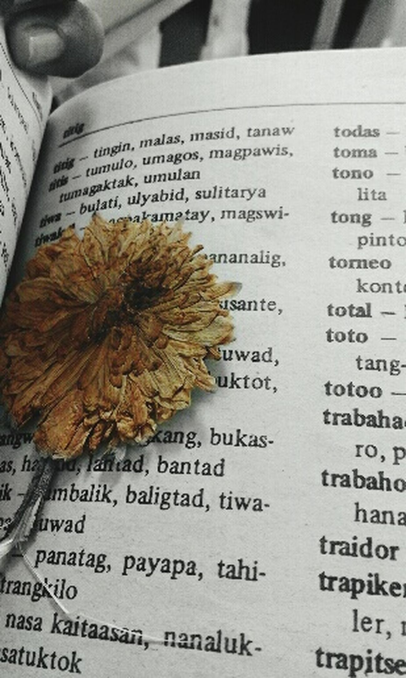 No People Handwriting  Paper Day Flower Flowers Flower Collection EyTexte Communication Indoors  Close-up