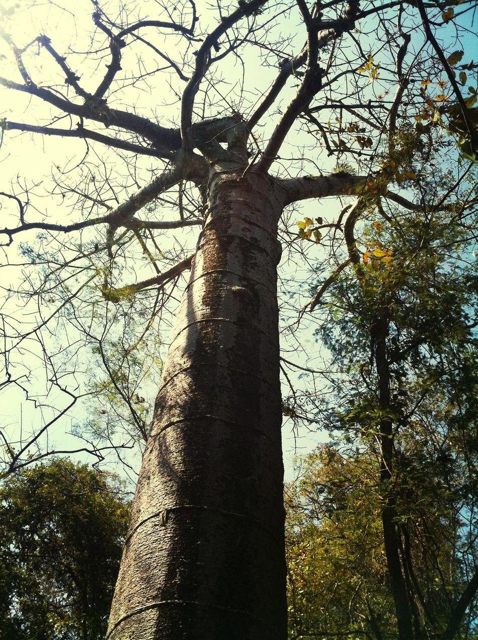 Nature Bosque Petrificado De Puyango El Oro Ecuador