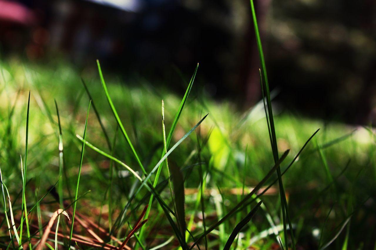 Green Grass Life for Ants First Eyeem Photo EyeEmNewHere EyeEmNewHere The Great Outdoors - 2017 EyeEm Awards