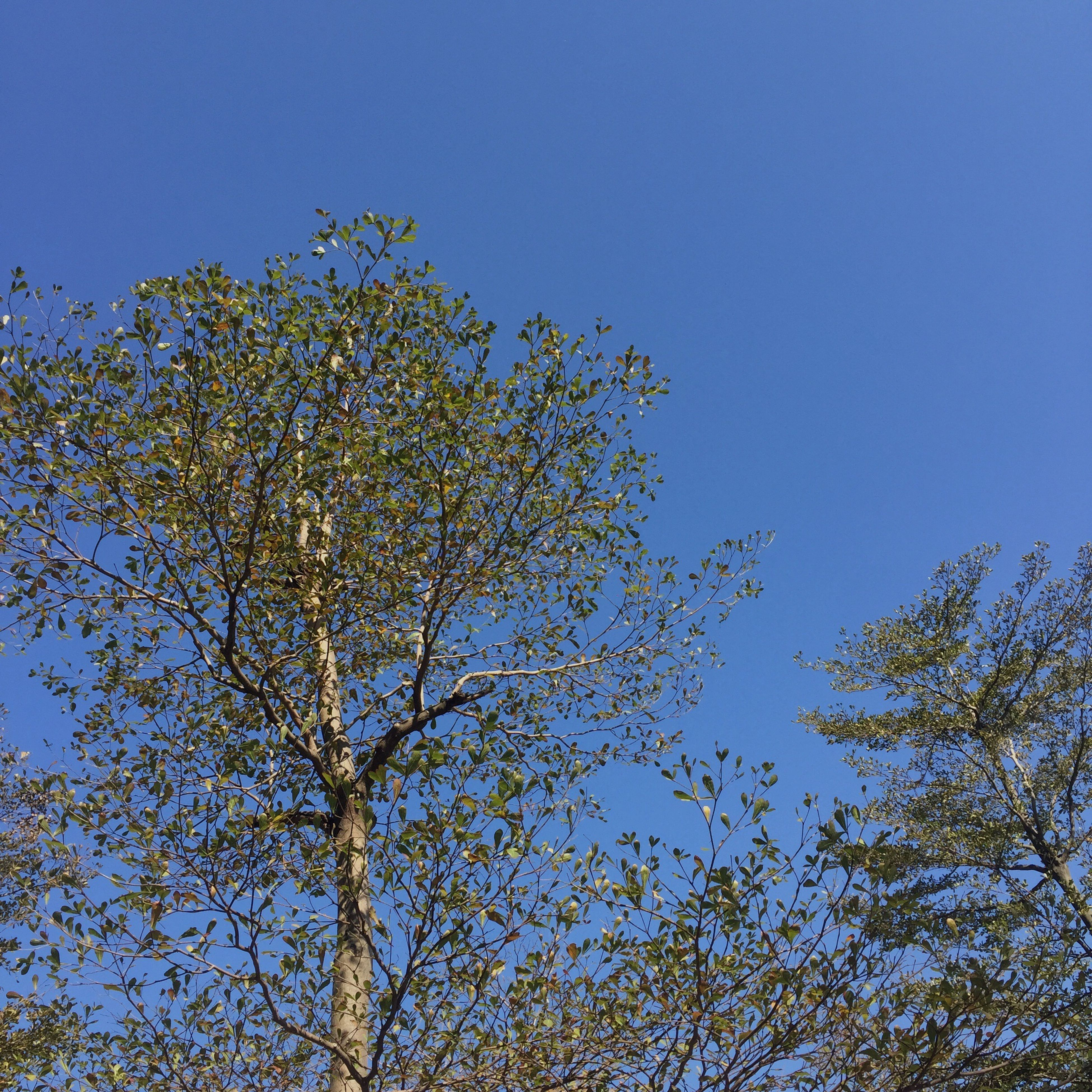 growth, low angle view, tree, nature, sky, no people, clear sky, day, beauty in nature, outdoors, freshness