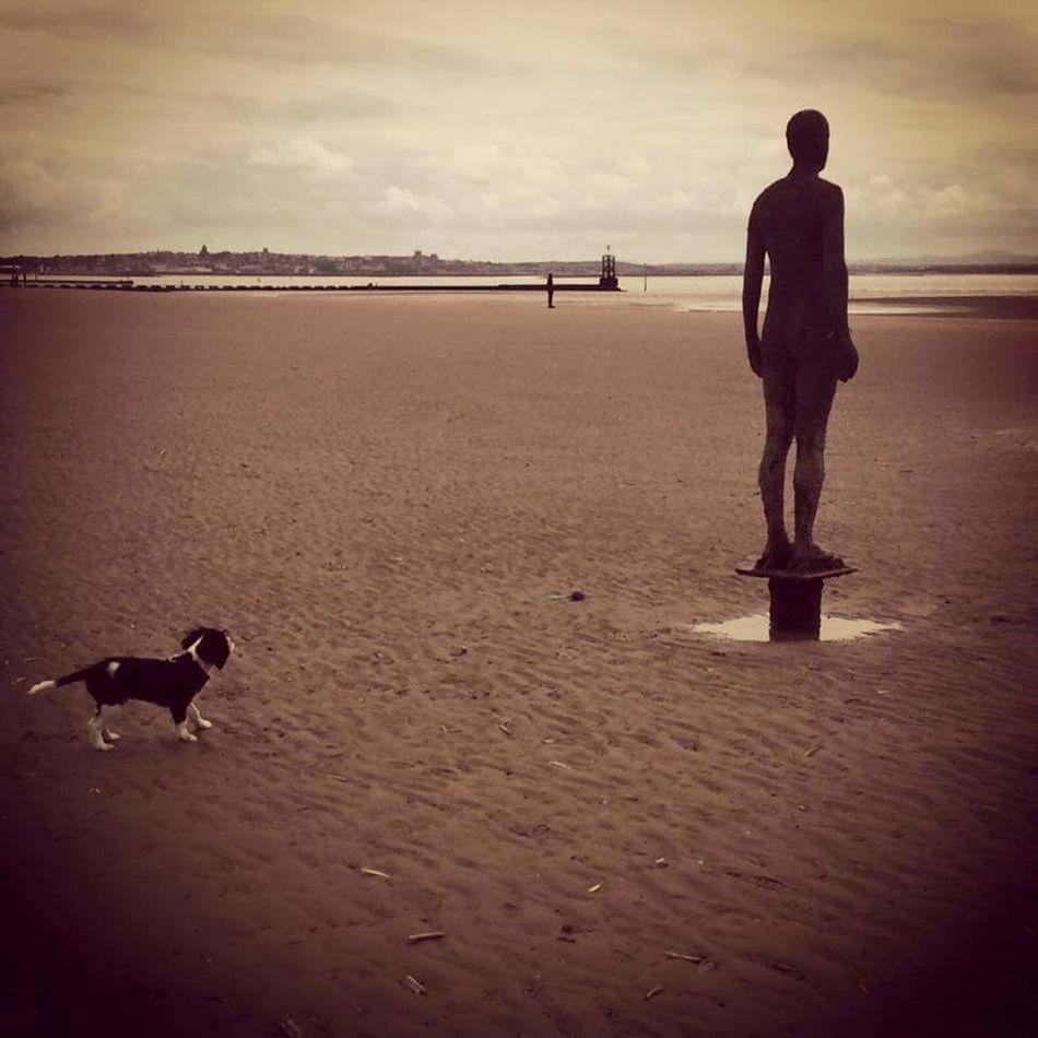 Beach Sea Sand Outdoors Dog Animal Themes Pets Figure Anthony Gormley Crosby Beach Crosby Curious Dog Puppy Playtime