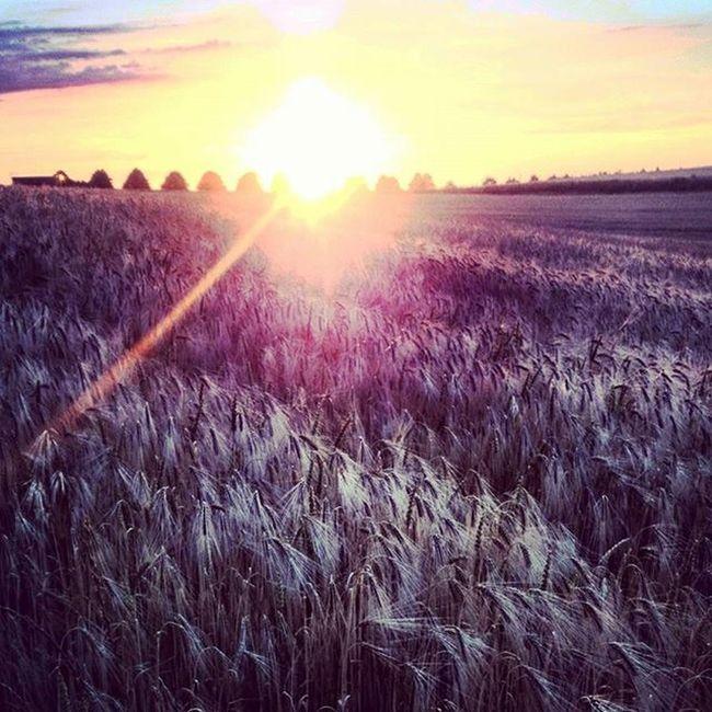 Einbettimkornfeld Instaphoto Lights Light Up Your Life Sunset Mobilephotography