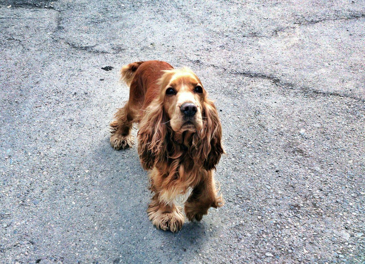 Beautiful stock photos of pets, Alertness, Animal, Animal Head, Animal Themes