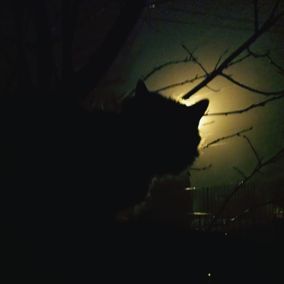 Cat Photography Silhouette Sunset Tree Dark Sky No People One Animal Nature Night Beauty In Nature Outdoors Mammal Surealism Abstract City Absurd Thoughts Close-up Love Architecture Shawdow Streetlights And Shadow