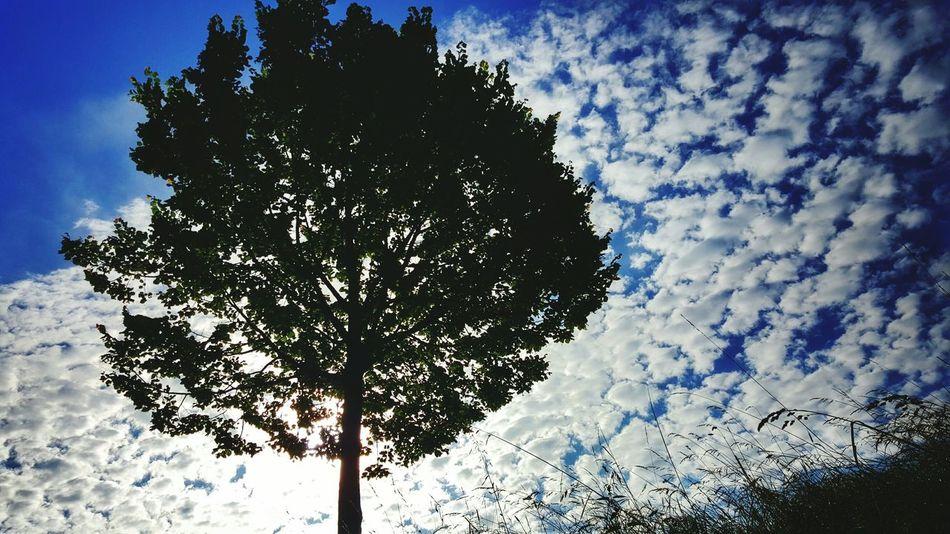 Relaxing Cloud - Sky Beauty In Nature Atmospheric Mood No People Tree