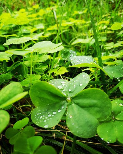 lluvia... Leaf Green Color Nature Water Growth Plant Outdoors