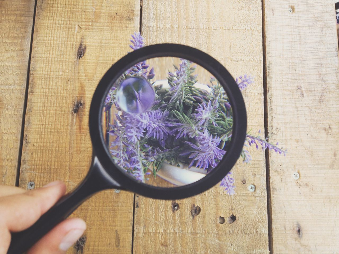 RePicture Growth focus Garden Nature Flowers Market Bestsellers June 2016 Bestsellers