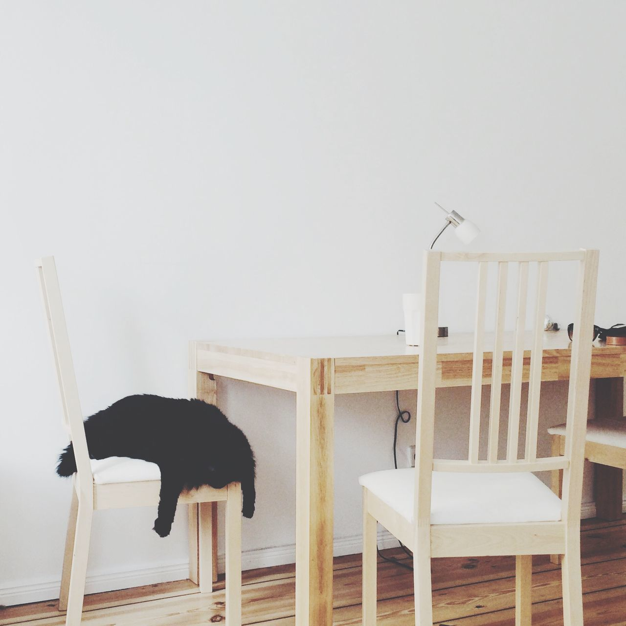 Beautiful stock photos of furniture, Animal Themes, Berlin, Black, Chair