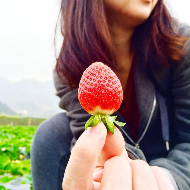 物 美女草莓