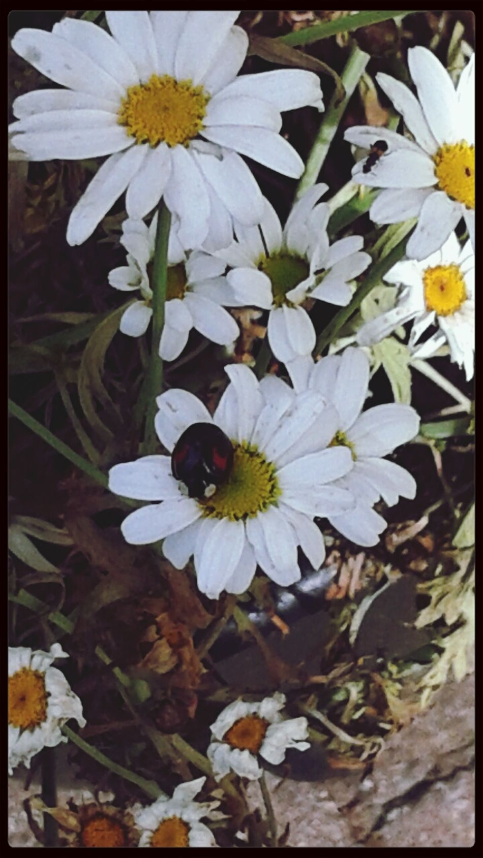 Flowers Buggs