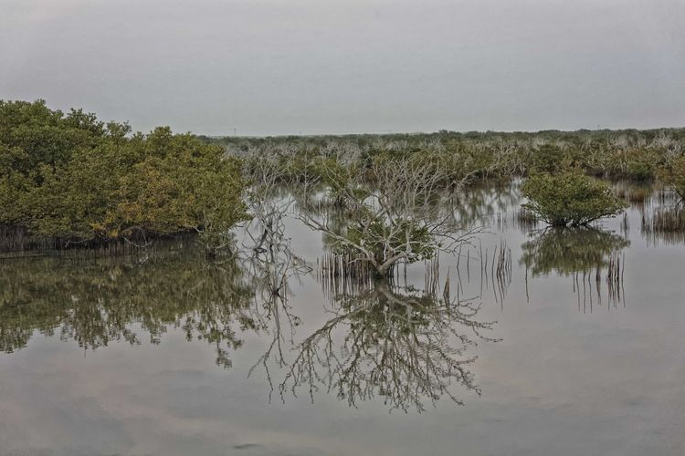 Perspectives On Nature Reflection Water Lake Nature Marsh Swamp Outdoors No People Tree Beauty In Nature Day Sky Mangrove Mangrove Swamp Mangroveplant Mangroves