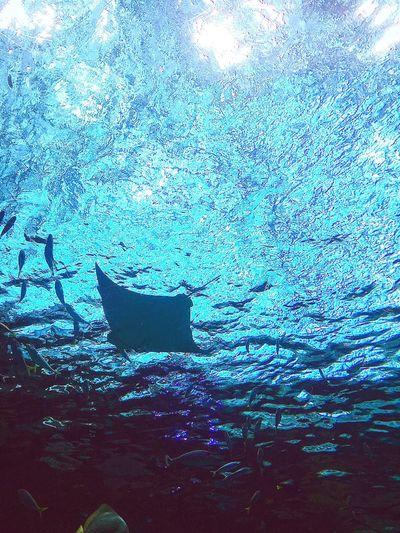 色のある世界 Underwater Sea Life Nature Beauty In Nature Point Of View