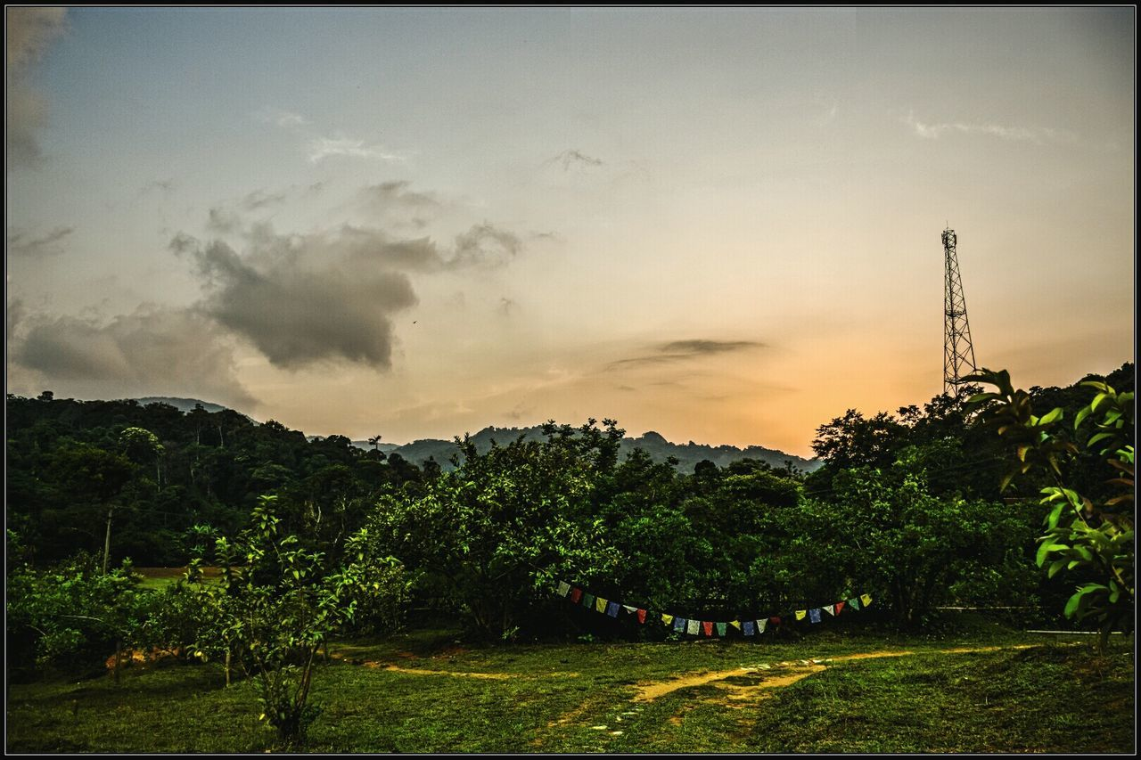 tree, sky, nature, beauty in nature, growth, landscape, scenics, tranquility, no people, tranquil scene, outdoors, plant, sunset, grass, day